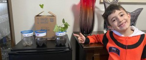 capa-post-plantas